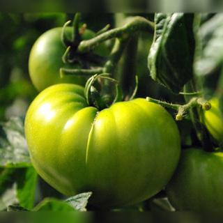 【急募!】野菜の受注に関する事務◆未経験・週3日4hOK!◆賞与あり