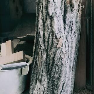 木屑・おがくず