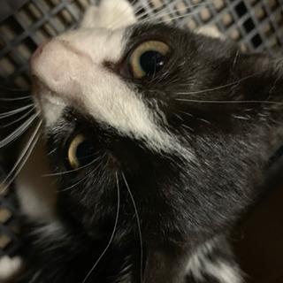 白黒のハチワレ猫ちゃん