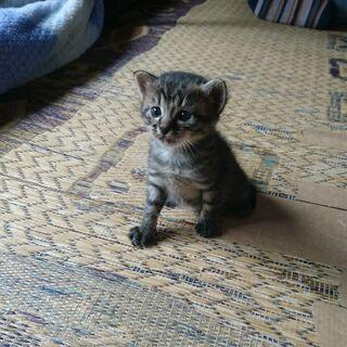 生後2ヶ月の子猫の里親を探しています