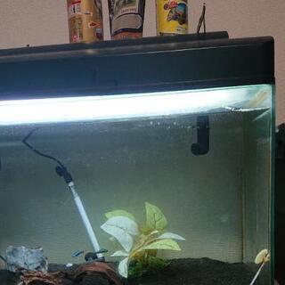 60cm水槽フルセット(魚・餌・ろ過マットスペア付き)