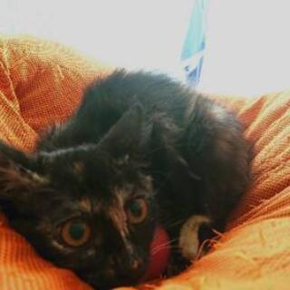 《写真再アップ》サビ猫(3ヶ月半) 女の子