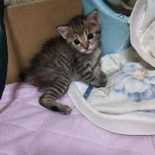 可愛い仔猫ちゃん💓