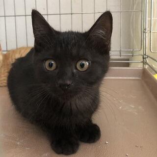 猫ちゃんの里親募集!約3ヶ月~4ヶ月位の子猫 数匹おります。