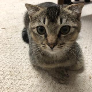 猫ちゃんの里親募集!約3ヶ月~4ヶ月位の子猫 数匹おります。 - 猫