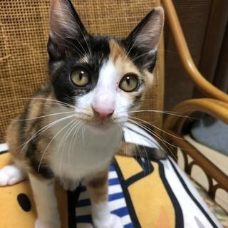 猫ちゃんの里親募集!約3ヶ月~4ヶ月位の子猫 数匹おります。 − 宮城県