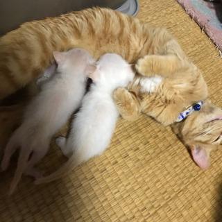 急募!!親子猫