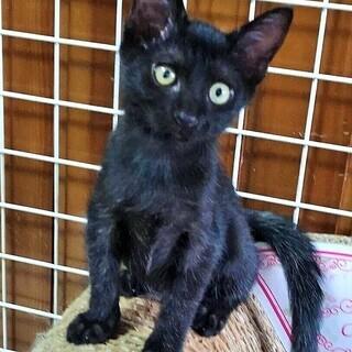 人気の黒子猫兄妹(約生後2か月)