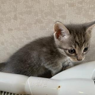 7月1日産まれの仔猫