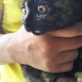 サビ猫♀ 4か月 里親決定!