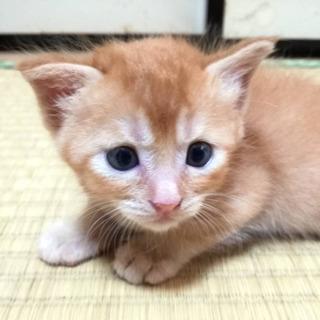 動物管理センター引き出し⑫ − 愛知県
