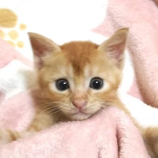 動物管理センター引き出し⑫ - 猫