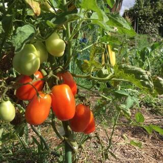 料理教室「トマト尽くし」