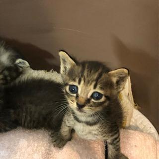 生後3週間 子猫ちゃん達です