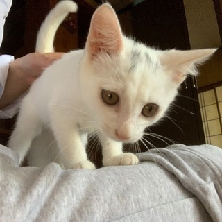 3ヶ月保護子猫 里親様を募集しています!