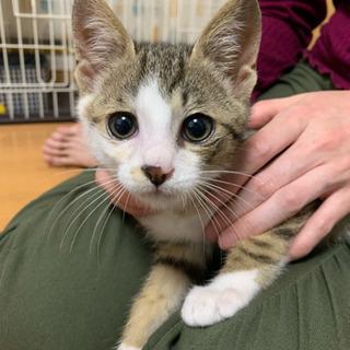 【急募】保護猫ちゃんを可愛がってくださる飼い主様☆ - 猫