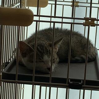 【急募】保護猫ちゃんを可愛がってくださる飼い主様☆ - 日高郡