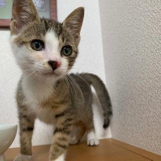 【急募】保護猫ちゃんを可愛がってくださる飼い主様☆