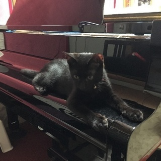 黒猫子猫里親さん募集