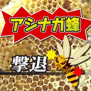 【アシナガバチの巣駆除】プロがスピーディに撃退! 命に関わる危険...