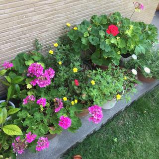 〜取引中〜鉢植え 盆栽 花 サボテン 多肉植物など