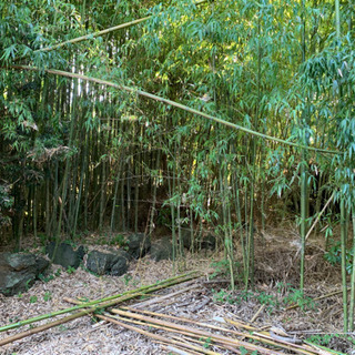 真竹 青竹 有ります!夏の課題や工作に必要な方。