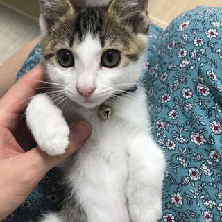 2ヶ月子猫 男の子(一時中断)