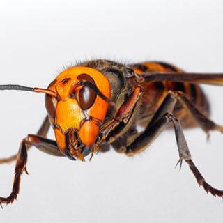 蜂被害でお困りの方へ
