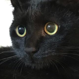 ノラ子猫メス