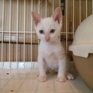 ブルーアイの可愛い赤ちゃん猫!