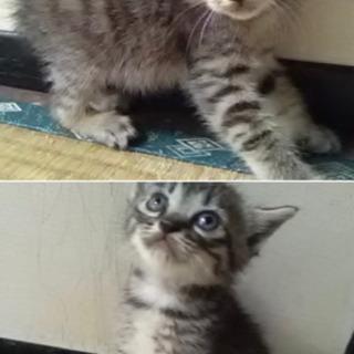 実家の庭に子猫が産まれて里親募集しますT^T2匹います