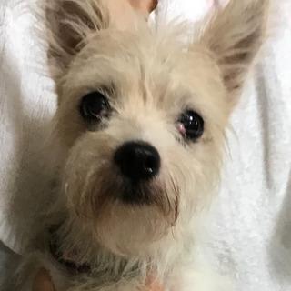 ジャックラセルテリア ミックス犬6歳ほど オス - 佐賀市