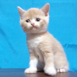 Cat's愛  ブリーダーです