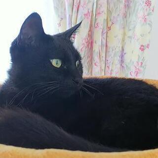 再募集です。可愛い声、素敵な瞳の黒猫ちゃん♀️💕