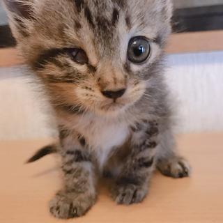 生後2ヶ月の仔猫