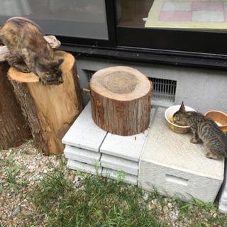 若い猫の里親募集