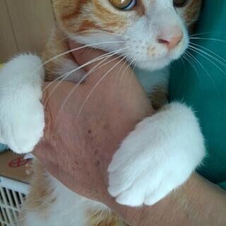 スタイル抜群トリオ:ミルクティ姉妹、茶白ボーイ4か月齢 - 猫