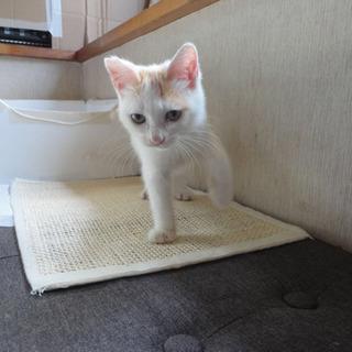 子猫3ヶ月 男の子