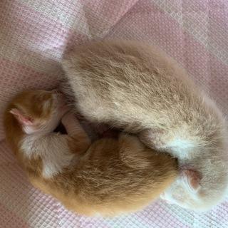 避妊手術のタイミングを逸して、産まれる事を選択した愛らしい兄弟子ニャン