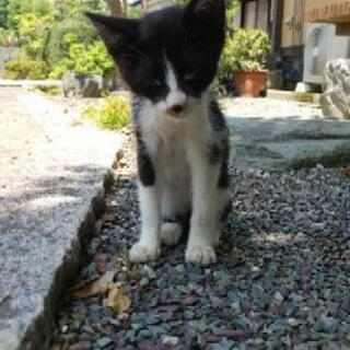 生後2ヶ月の子猫