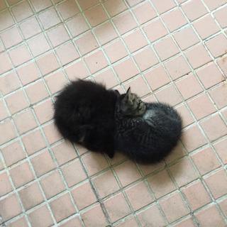 猫を飼エル方募集します