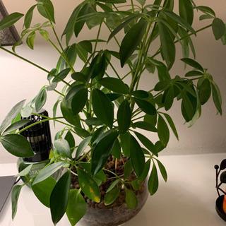 ハイドロ観葉植物セット