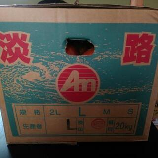 淡路島産 たまねき L 20キロ