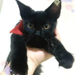 生後4ヶ月(?) 子猫の里親募集☆
