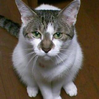 猫専門ペットシッターサービス『ながさきのねこシッターさん』です!