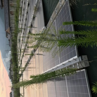 【急募】太陽光発電所の除草:清掃作業
