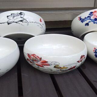 ミニ睡蓮鉢
