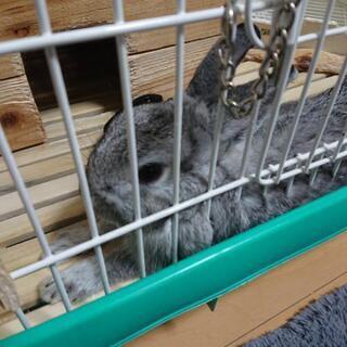 ウサギを貰って頂けませんか?