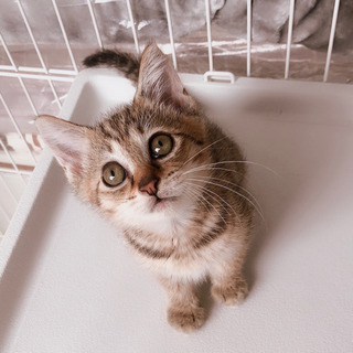 美人さんな子猫