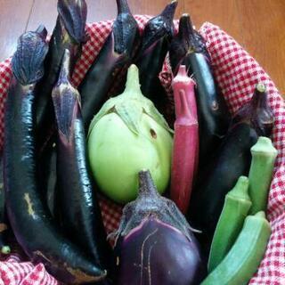ナスたっぷりオーガニック野菜セット